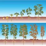Criação de infográfico para apresentação - Cliente: Monsanto